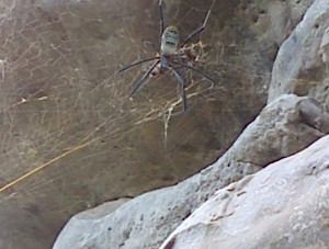 We saw this spider at Peers cave